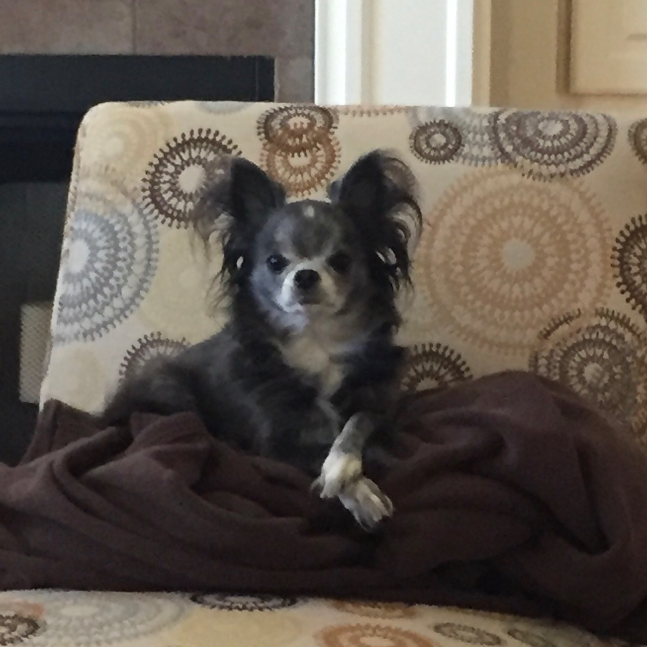 Turnberry Place Apartments: Pet Of The Month